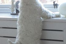 Love dogs,Westies / by Marcy