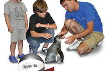 Aquatic Adventures! / by Long Island Aquarium & Exhibition Center