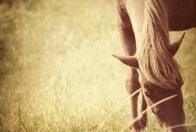 Horses<3 / by Sara Christiansen