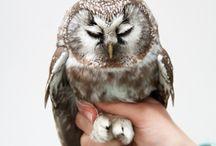 Owlies! / by Annamarie Lucas