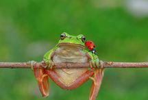 Beautiful Frogs / by Josie Goytisolo