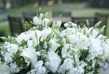For the LOVE of WHITE!! / by Barbara Hainsworth