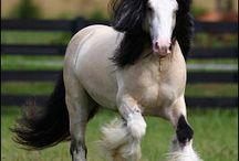 Horses / by Susan Gendron Huotari