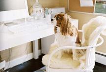 Cavalier Dogs / by Kristen Ellis