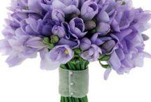 Lavender! / by Leila Salazar Sanchez