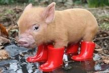 Cutest Damn Animals! / by Paula Craig