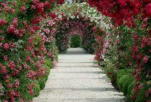 Gardens / by Andi Behrmann