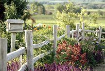 Garden  / by Donna Long