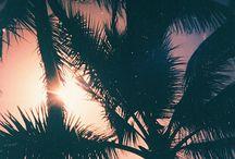 Palms / by Kula Nalu Ocean Sports