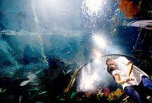 aquarium engagement / by Kadi Erickson