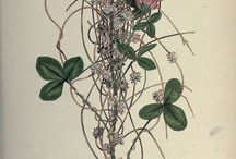 Botany and Other Scientific Illustrations / by Jen Boulay