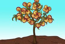 Fruit Trees / by Alberta