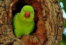 Birds / by Eunice Lee