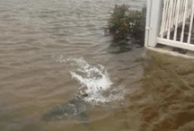 Hurricane Sandy / Sadly this photo of the shark has been debunked. It's a photoshop image. So fake... / by plasmaborne4rel