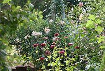 Gardens / by Karen Hetrick