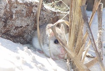 Alabama Beach Mouse / by Christine Walley