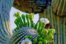 CACTI....OUCH!!! / by Carmen turner