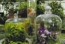 Gardening / by Linda Wyatt