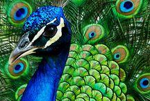 Divine Design- Birds / by Karen Swanger