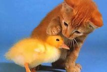 Animal Captions / Like and caption these amazing animal pics. Follow us on Pinterest for updated pics. / by CrazySales.com.au