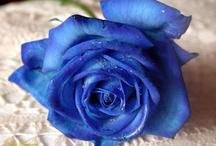 Blue Crush / by Khufrah Lessey