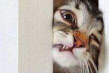 meow  / by Mariah Newman