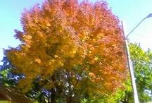 Autumn Beauty / by Jennifer Wagner