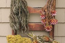 Dried Flowers, Herbs & more / by Nancy Poliseno Buck