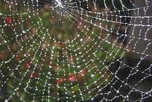 Oh What A Terrible Web We Weave / by Terry Sutherland