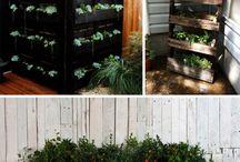 Plants/growing / by Matt Nielsen