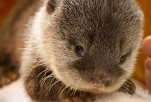 I'm obsessed with otters / by Katie Marbury