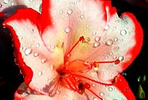 Flowers / by Sarah Therien