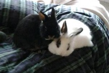 My Bunnies & more Bunnies / Bunnies are cute but mine are cuter.. most of the time :) / by Madalyn Lutsch