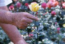 Flower Gardening Tips and Tricks / by Bernadette Fox