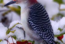 Birds at my feeder / by Meredith Goodrich