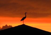 Birds / by Emilie Brown