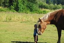 Horses / by Bobbie Howell Dalton