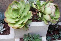 Garden Ideas & Inspiration / by Tan Le