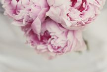 Pulchritudinous Pinks / by Gracie Wallace