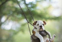 Animals / by Ashley Walter