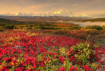 Beautiful Scenery :) / by Ashley Lehman