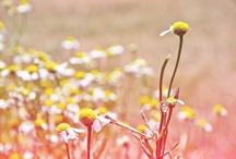 Beauty in Nature / by Joninina Andaya