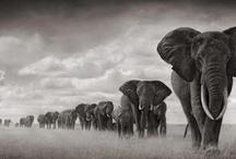 africa / by Rachele Herimann