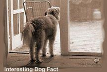 Dog lov-ING / by Tammy Chivers Baker