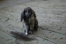 Bunny Love / by Erica Dunn Rácz