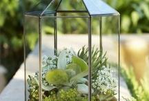 Plants & Gardening / by Catherine Parkinson