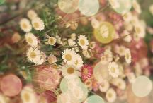 Flowers make me happy / by Shirley Cole-Georgeson