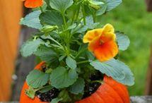 Green Thumb Gardening / by Variety Online Shopping