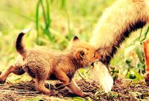 Cute Animals / The most cutest and funniest things <3 / by ☆~(ゝ。∂) 키티 니나✖óÓÒò✖