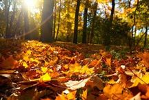 Landscape Advice / Landscape advice you can apply to your home / by The Davey Tree Expert Company